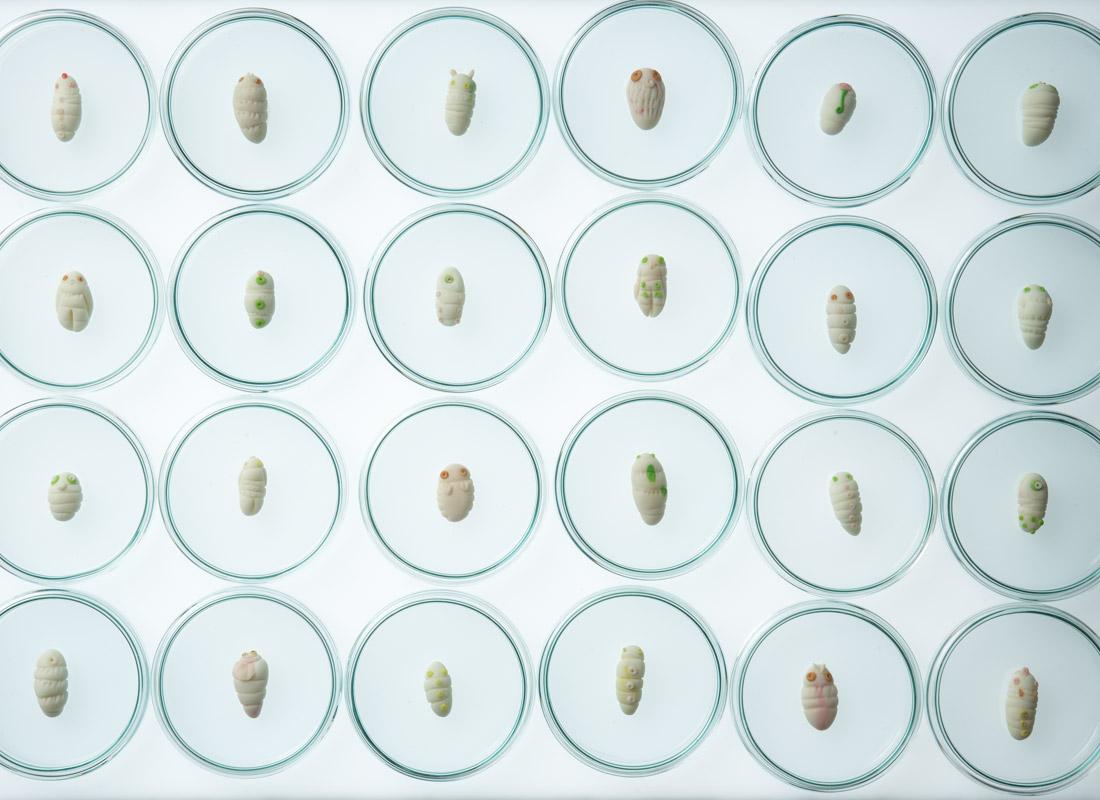 petrileuchtlarven